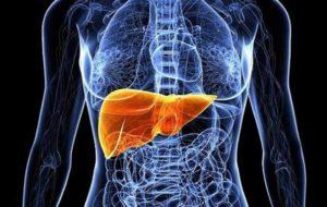 مواد خوراکی مفید در حفظ سلامت کبد را بشناسید