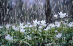 ورود سامانه بارشی به کشور/روز طبیعت آفتابی در کل کشور