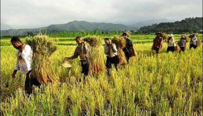 دولت برنامهای برای اشتغال فراگیر در بخش کشاورزی ندارد!
