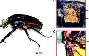 محققان سوسک را به نرم ربات تبدیل کردند