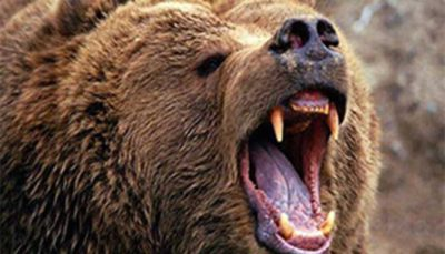 65 5 سیرک, خرس, حیات وحش, حیوانات وحشی, حمله خرس