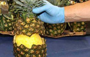 کشف دهها کیلو کوکائین جاسازی شده در آناناس!
