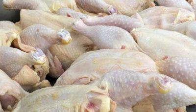 1 16 قیمت گوشت مرغ, قیمت مرغ