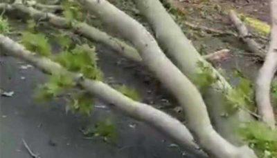 سقوط درخت عظیمالجثه ۱۰۰ ساله در خیابان ولیعصر تهران