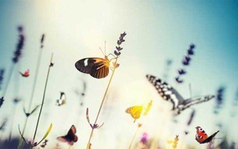 هجوم پروانهها؛ این بار به شهر کویری مرکز ایران