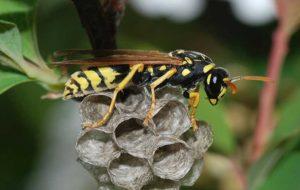 زنبورها قدرت استدلال دارند