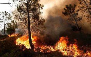 آتشسوزی جنگلها و اعلام وضعیت اضطراری در جنوب مکزیک