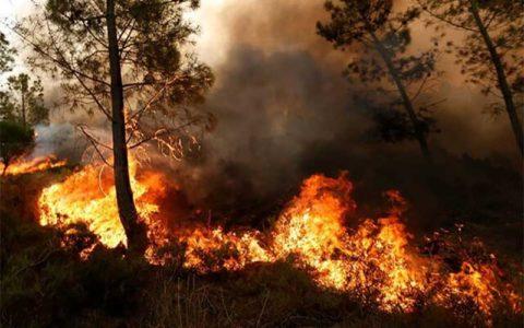 آتش سوزی ۶۴ هکتار از مزارع و مراتع استان ایلام