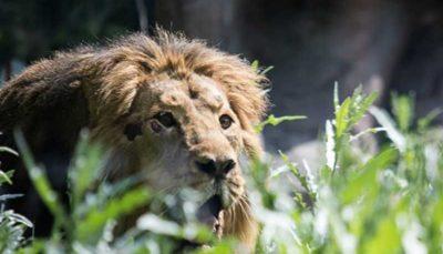 «ایلدا» و «هیرمان» را از خطر انقراض نجات دهید
