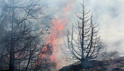 مجازات روشن کردن آتش در جنگلها چیست؟