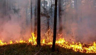 دلیل آتشسوزیها در قطب شمال