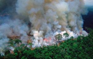 برزیل کمک جی۷ برای اطفاء حریق جنگلهای آمازون را رد کرد