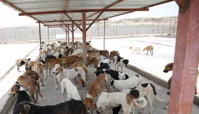 ۶ نکته برای کنترل جمعیت سگهای بلاصاحب