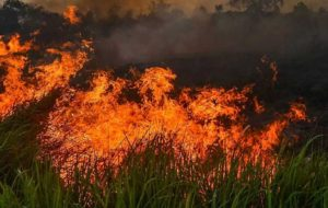 آتشسوزی جنگلی در مجمع الجزایر قناری