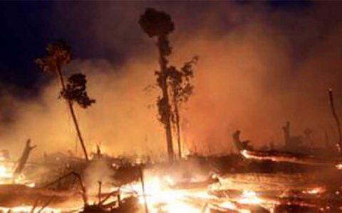 وضعیت آتشسوزیهای جنگلی در جهان