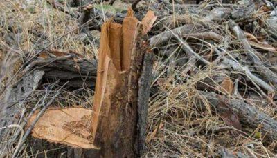 جزئیات ورود پلیس به پرونده قلع و قمع درختان در شمال تهران