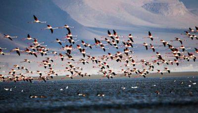 36 61 پرندگان, مرگ و میر, پرنده