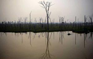 حریق در آمازون تهدیدی برای زیستگاه ماهیها