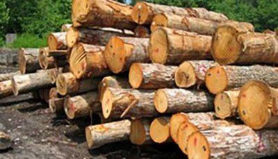 1 34 طرح جایگزین جنگلداری با رویکرد برداشت چوب تدوین نمیشود