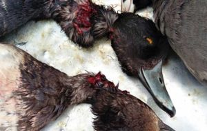 قتلگاه پرندگان مهاجر به وسعت آسمان خوزستان
