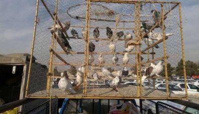 42 47 خرید و فروش پرندگان, محیط زیست, پلنگ ایرانی
