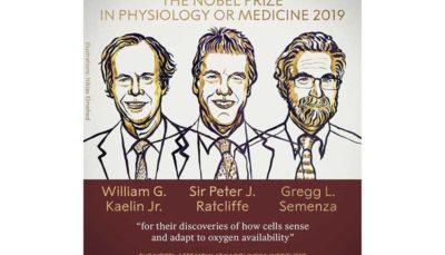 44 11 نوبل پزشکی, کمیته نوبل, جایزه نوبل