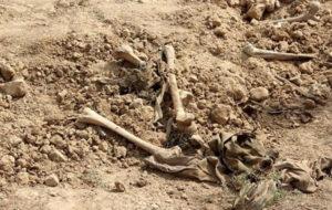 کشف یک گور جمعی در شمال نجف