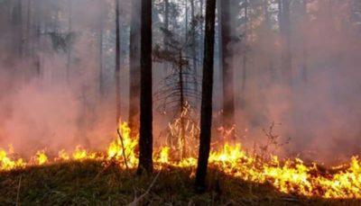 افزایش تلفات آتشسوزی در استرالیا