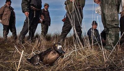 به نسلکشی پرندگان مهاجر در مازندران پایان دهید