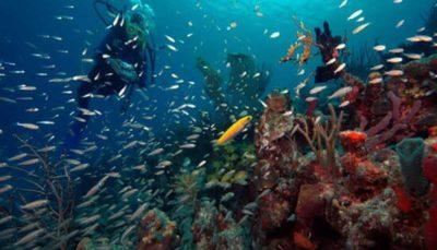 تاثیر افزایش دمای اقیانوسها بر تغییر اکوسیستمهای دریایی