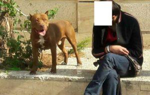 حمله سگ به دو شهروند در محله دزاشیب