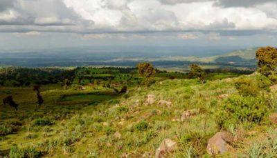 خطر انقراض در کمین گونههای گیاهیِ آفریقای استوایی