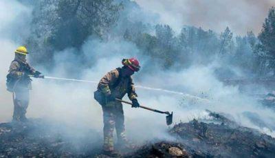 مهار ۷۰ درصد آتشسوزیهای جنگلی در کالیفرنیا