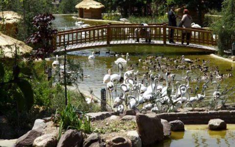 ۷۰۰ میلیارد تومان برای فاز دو باغ پرندگان خرج شده است