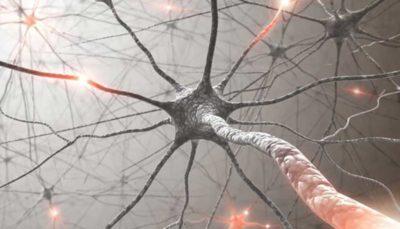 ارتباط «بیماری نورون حرکتی» با کلسترول
