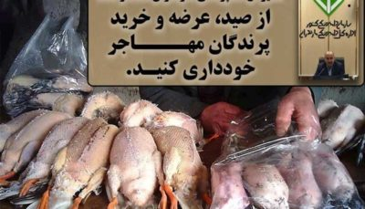 از خرید لاشه پرندگان مهاجر خودداری کنید