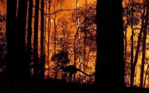 افزایش تلفات آتشسوزیهای جنگلی در استرالیا