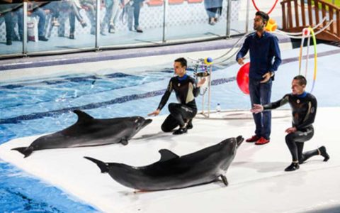تشریح جزئیات علت مرگ دلفین در دلفیناریوم برج میلاد مجموعه دلفیناریوم, دلفیناریوم, مرگ دلفین, مرگ آلفا, برج میلاد