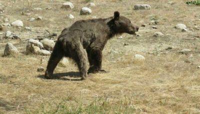 جزییات ماجرای کشتن توله خرس در سوادکوه