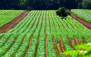جلوگیری از زمین خواری 370 هزار هکتار منابع طبیعی