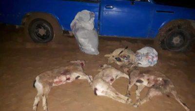 دستگیری شکارچیان قوچها و پازنهای پناهگاه حیاتوحش خوشییلاق