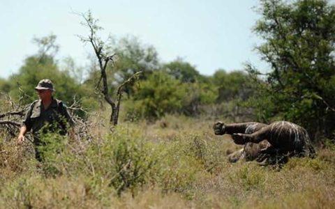 رشد جهانی قاچاق حیات وحش و انقراض گونههای حساس