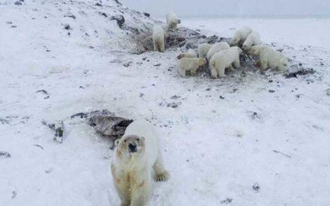 هجوم خرسها به روستایی در روسیه