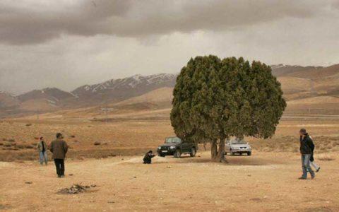 تک درخت به نام عباس کیارستمی ثبت می شود