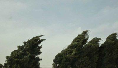وزش باد شدید در جنوب کشور