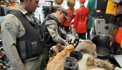 کشف و ضبط پوشاک با پوست حیوانات وحشی در تهران
