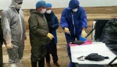 علت تلفات پرندگان مهاجر از سوی دامپزشکی گلستان اعلام میشود
