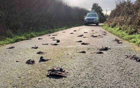 مرگ مشکوک پرندگان را به سرعت به مرکز بهداشت اطلاع دهید