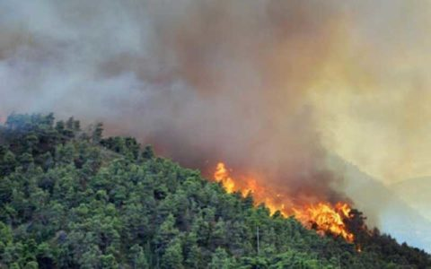 وقوع حریق در 9 نقطه از جنگلهای هیرکانی تالش