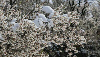 بهار برفی در روستاهای قم قم, طبیعت بهاری, بارش برف